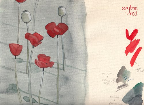 Zwerger Poppies